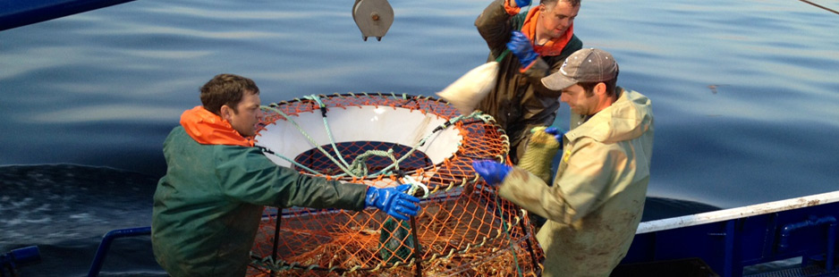 Fishers emptying Atlantic Canada snow crab pots